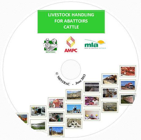 Livestock Handling for Abattoirs - Cattle